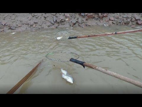 Electric Fishing 20180927