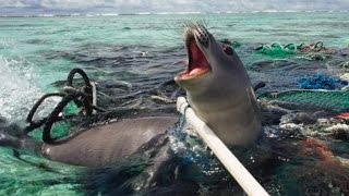 Recycling the damaged fishing nets polluting our oceans