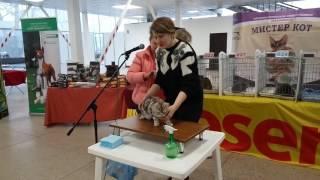 Мишка на оценке в WCF-ринге у эксперта Ольги Рогачевой-Кузако. Минск, 11 февраля