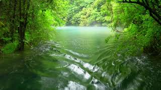 Relaxing River Sounds - Peaceful Forest River - 4K60P - Nature Video - White Noise