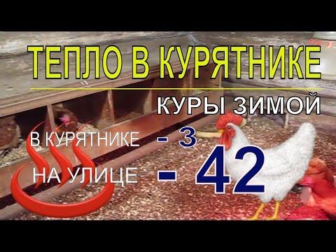 Мороз 42. В курятнике с курами несушками зимой тепло