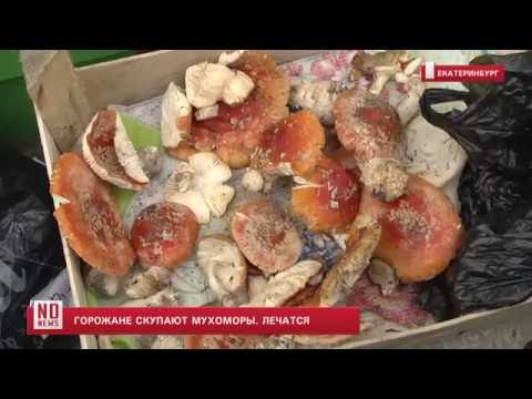 В Екатеринбурге люди скупают мухоморы, чтобы лечиться