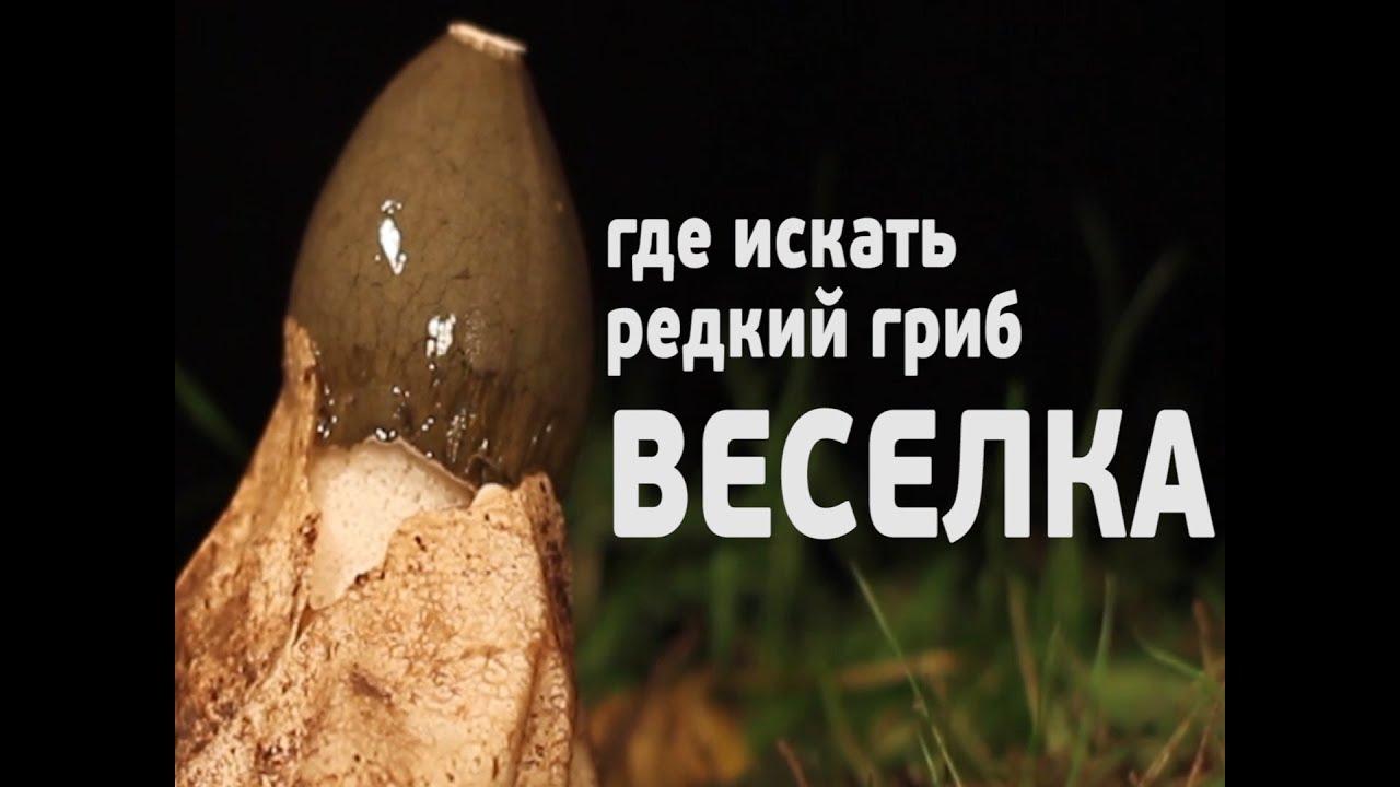 гриб весёлка картинки