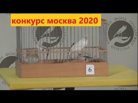 Конкурс пения РУССКОЙ канарейки весна 2020