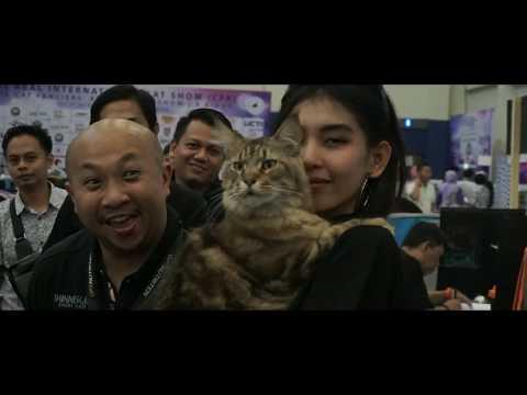 Bhinneka - Cat Show CFA - 29-30 July 2017
