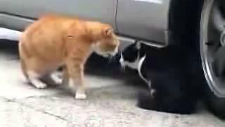 screeming cats,оружие коты приколы 2014