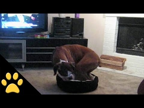 Big Dog, Little Bed... You Know Where This Is Going