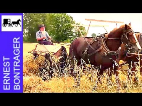 Amish Farmer with 4 Horse Hitch Binding Wheat