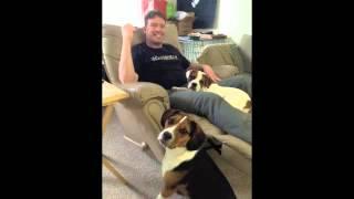 We Love Our Beagle-english Bulldog Mixes (beabull)!  Rescue A Beabull!
