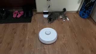 """Кот не пускает робота-пылесоса """"домой""""."""