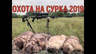 Охота на сурка в Ростовской области 2019