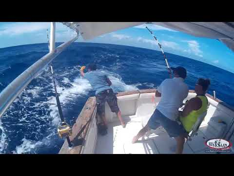 Big Marlin Deep Sea Fishing Charters Punta Cana Tours
