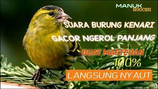 HD Audio Suara Burung Kenari Gacor Masteran Burung Kenari