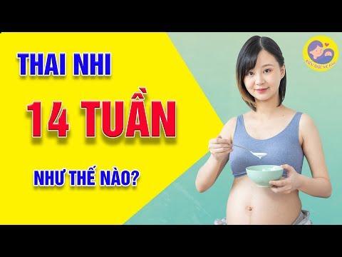 🍀 [CẨM NANG MẸ BẦU] - Quá Trình Hình Thành Và Phát Triển Của Thai Nhi Tuần Thứ 14 Mẹ Bầu Cần Biết