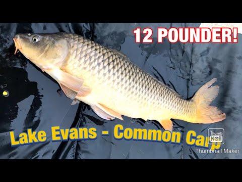 12LB Carp - Lake Evans