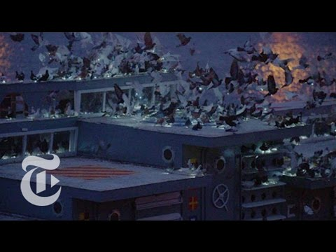 2,000 Trained Pigeons Take Flight | The New York Times
