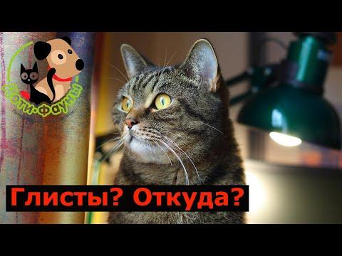 Как домашняя кошка может заразиться глистами, чумкой...? Откуда блохи? Пути заноса инфекции