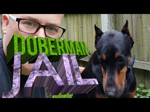 Building Doberman a Fenced in Run Lot / Jail
