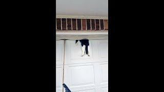Man Returned Home To Find His Cat Trapped In His Garage Door - This Is What He Does