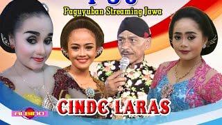 streaming oleh ALBINO COKEK - CINDE LARAS Live NGRANCANG, RINI,INTAN,WILLIS vs SIMIN LUCUNE POOLL