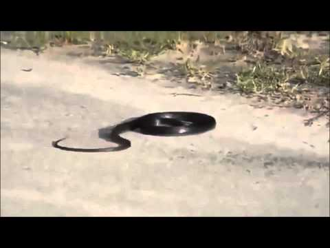 Weird Snake Goes Crazy And Kills Itself