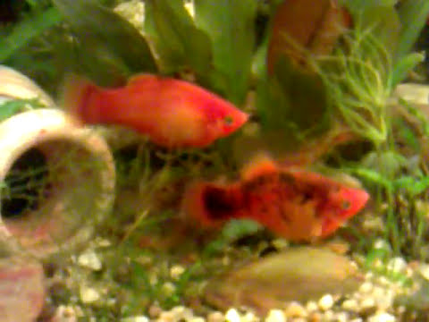 Ряска – как выглядит на фото в аквариуме, польза и вред