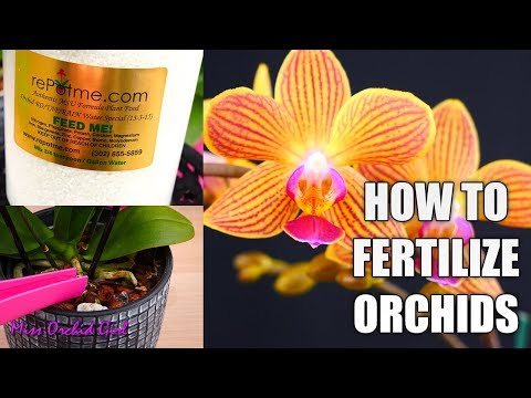 Orchid Care for beginners - How to fertilize Phalaenopsis Orchids
