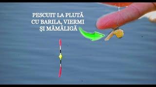 Pescuit LA PLUTĂ cu BARILA, Viermi și Mămăligă Pe LAC SALBATIC - Caras și Crap la Bologneza de 5m.