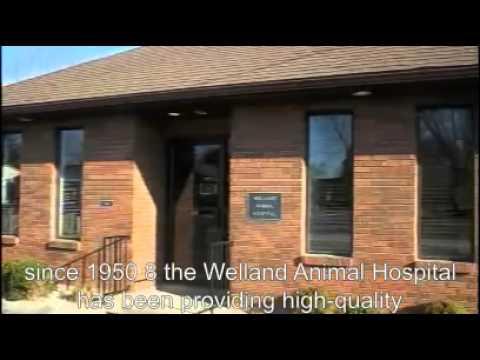 Welland Animal Hospital in Welland, ON