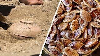 800 Yıllık Tohum Buldular DİKTİKLERİNDE İse ŞOK Oldular !
