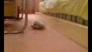 Rabbit Sleeps