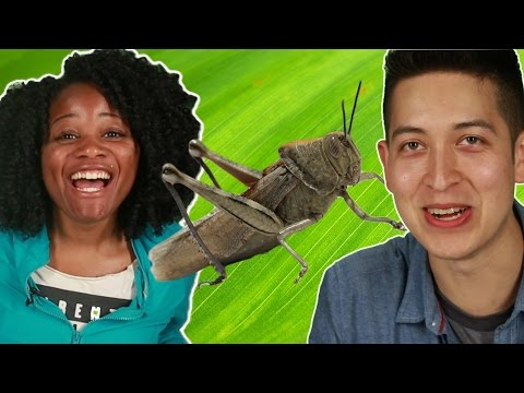 Thumbnail: People Get Tricked Into Eating Cricket Protein Bars