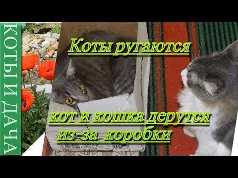 Коты ругаются. Кот и кошка дерутся. Коты и дача./Cats fighting