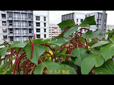 Kampung Admiralty Rooftop Garden --(最高峰HD)