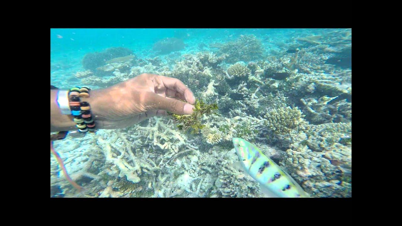 Amazing Snorkeling In Maldives