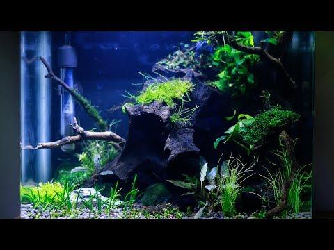 Nano Aquascape - Low Light Betta Planted Aquarium | Electra Snow