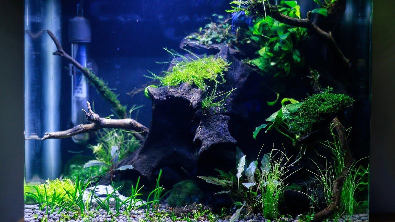 Nano Aquascape Low Light Betta Planted Aquarium Electra Snow