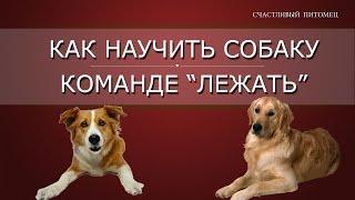 ➥ Как научить собаку команде лежать