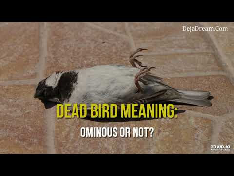 Dead Bird Meaning: Ominous Or Not?