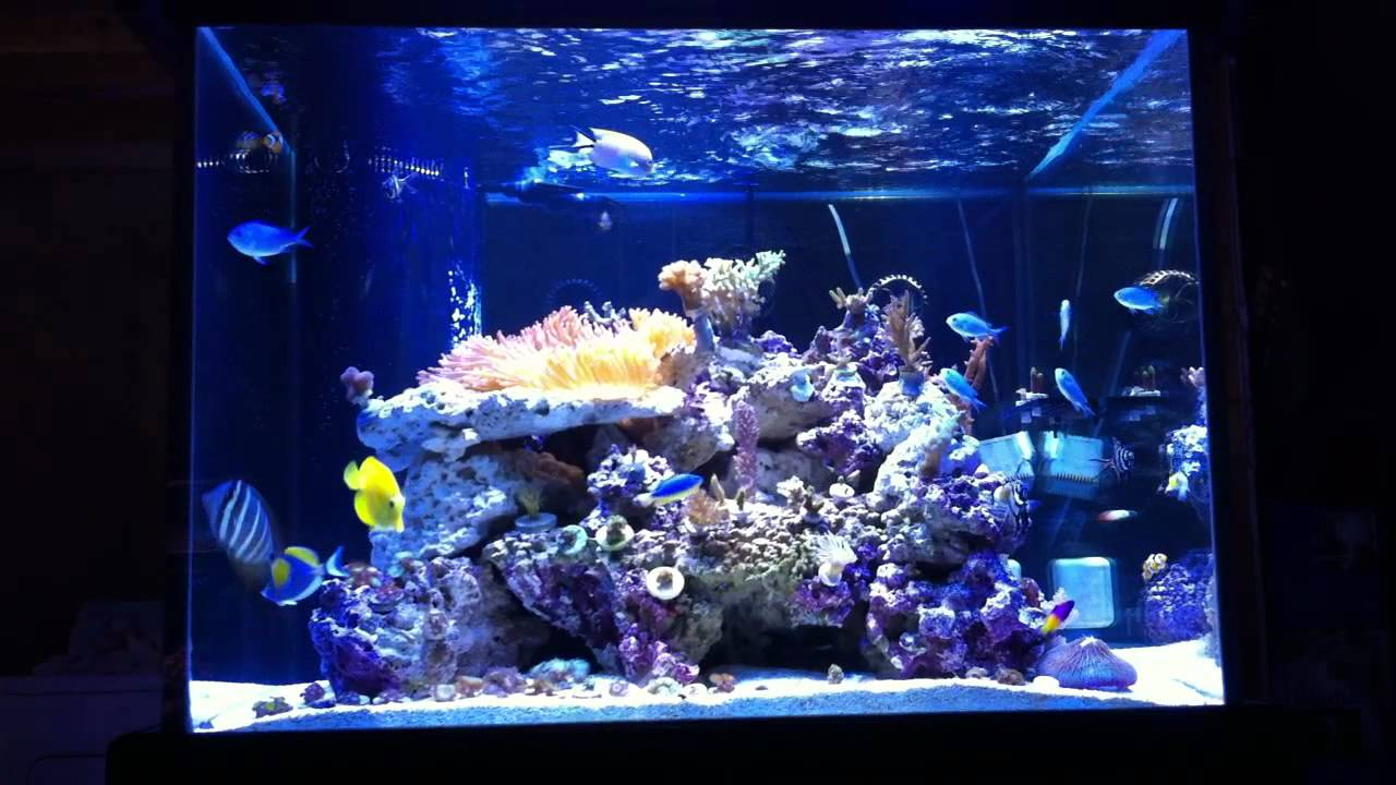 150g marineland cube mixed reef tank my glass box youtube for Cube saltwater fish tank