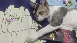 আমার আদরের জেরি😍😍সবাই দেখবেন My favourite Pet Jerry 😍😍 Cat Lover Must watch,Like share pls Guys