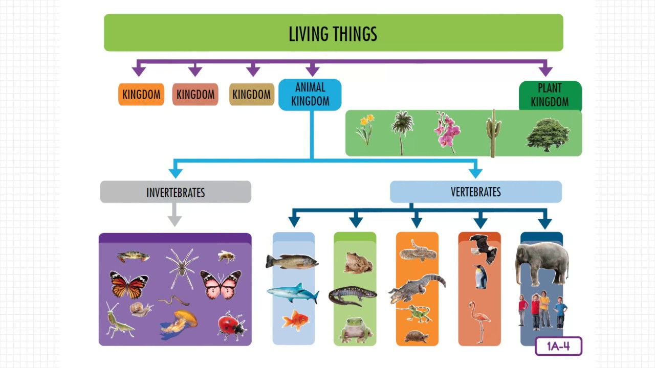 animal classification Animal classification - animals can be classified using various characteristics whether an animal has skin, hair, or feathers depends on the kinds of cells it has the building blocks of all living things are cells.