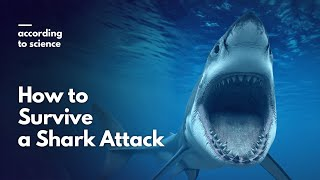 How to Survive a Shark Attack, According to Science