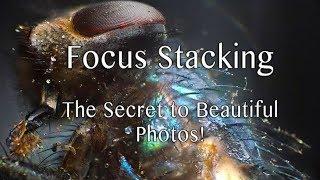 Focus Stacking: The Secret to Beautiful Photos