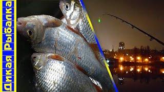 Хорошая подготовка к рыбалке половина успеха Ловим плотву зимой на фидер Рыбалка ночью