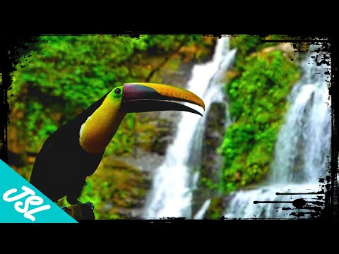 The Intense Biodiversity of Costa Rica