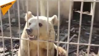 بالصور والفيديو...حتى الحيوانات لم تسلم من