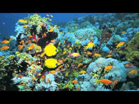 Human Impact on the Marine Biome