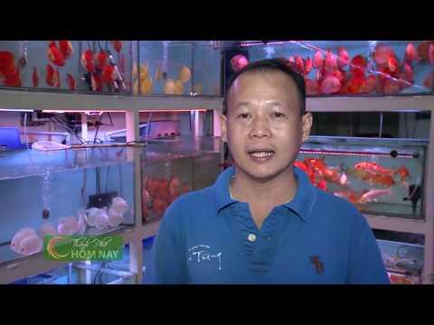 Phố cá cảnh Lưu Xuân Tín - Thành Phố Hôm Nay [HTV9 – 07.01.2016]