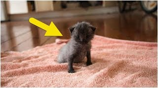 After Finding A Sick Kitten, This Woman Was Stunned When It Began To Change Color